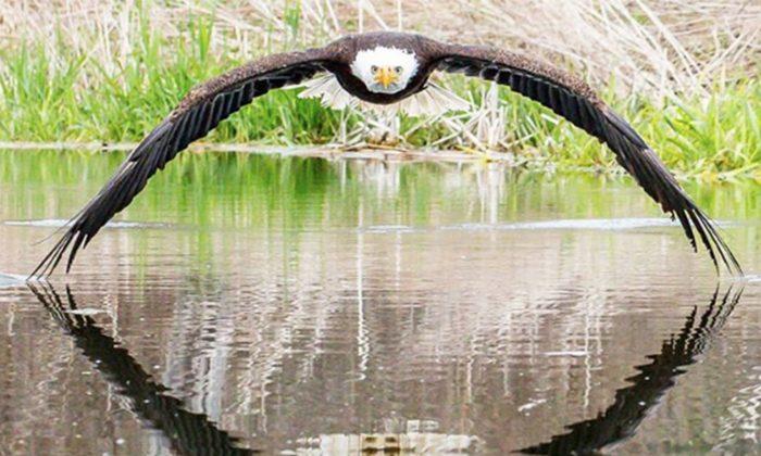 bald eagle fb 1 1 700x420 1