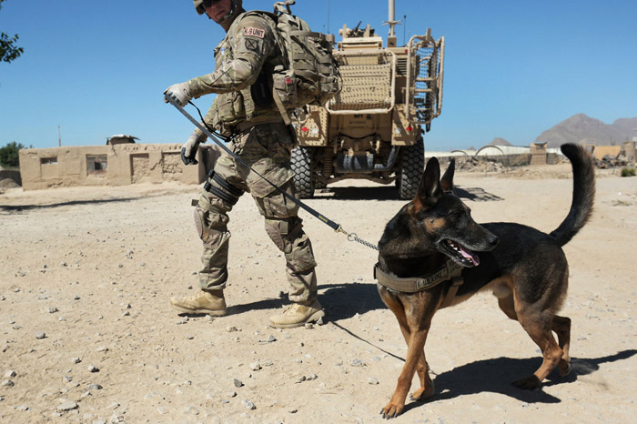 American Humane group says US left military dogs behind in Afghanistan